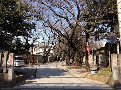 東京都豊島区雑司が谷にある法明寺の参道。この両側には塔頭が並んでいます。