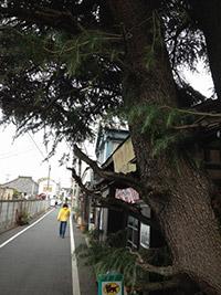 今や観光まち歩きのメッカとなっている谷中。震災・戦災を免れたので、趣ある寺町が残されています。
