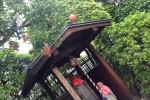 早稲田大学近く龍泉院のザクロ