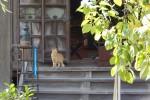 城下町小田原は、宿場町、寺町、猫町