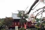 上野清水観音堂と十月桜