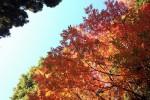 小平小川寺の紅葉