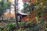 国分寺お鷹の道 真姿の池湧水群
