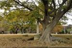 武蔵国分寺跡も落ち葉に満ちて
