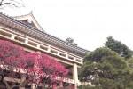 牡丹寺・薬王院の紅梅