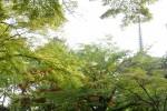 初夏の奈良公園