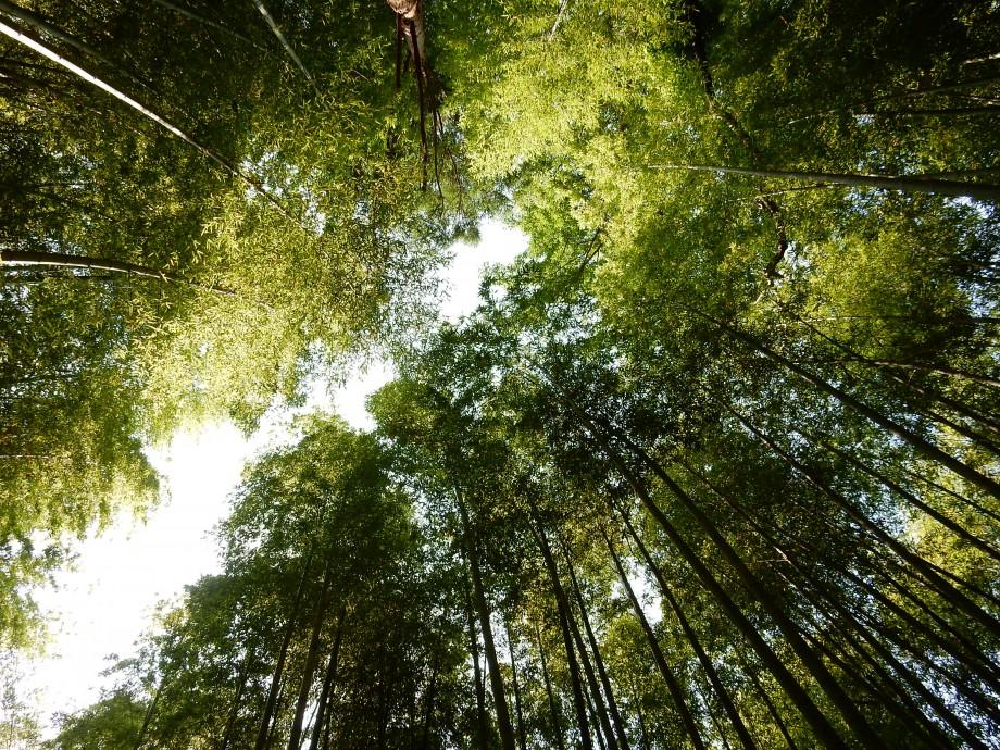 武家屋敷と七福神の竹林