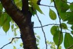 鈴ヶ森の蝉