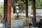 手水鉢の猫住職 彦根の名刹宗安寺
