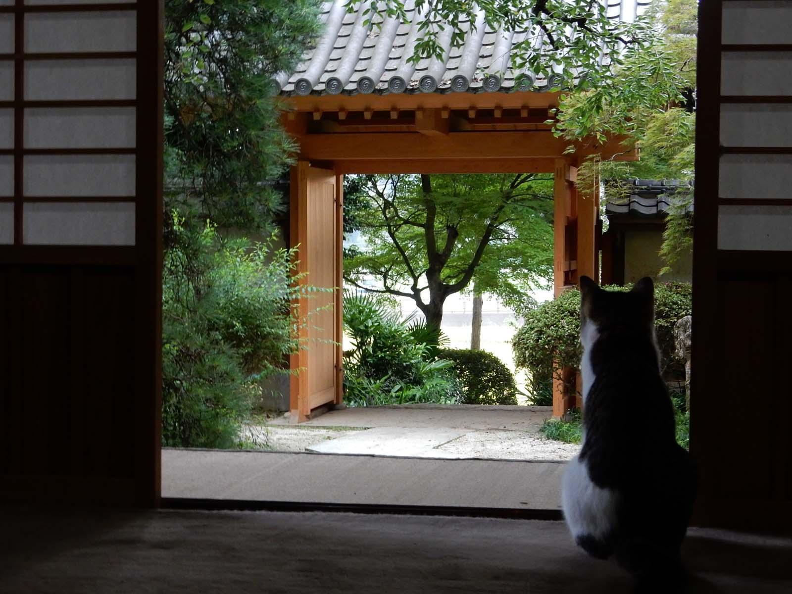 親鸞聖人ゆかりの地で猫と雷雨にあう