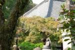 四季を映す寺 川越中院