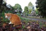 お寺と猫の深く長い関係