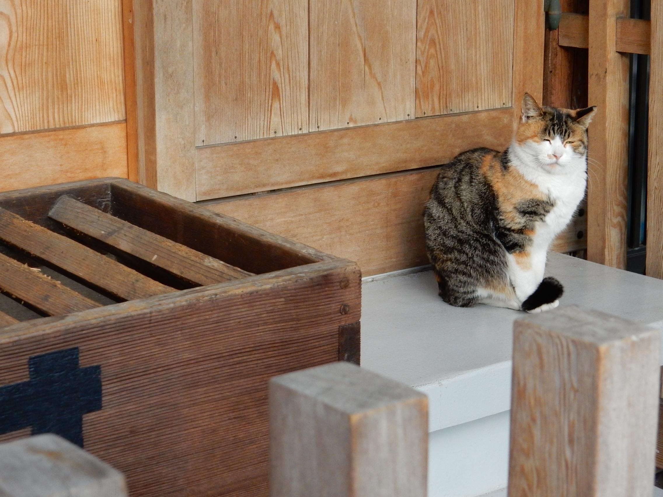 ぽかぽか冬至の居眠り寺猫