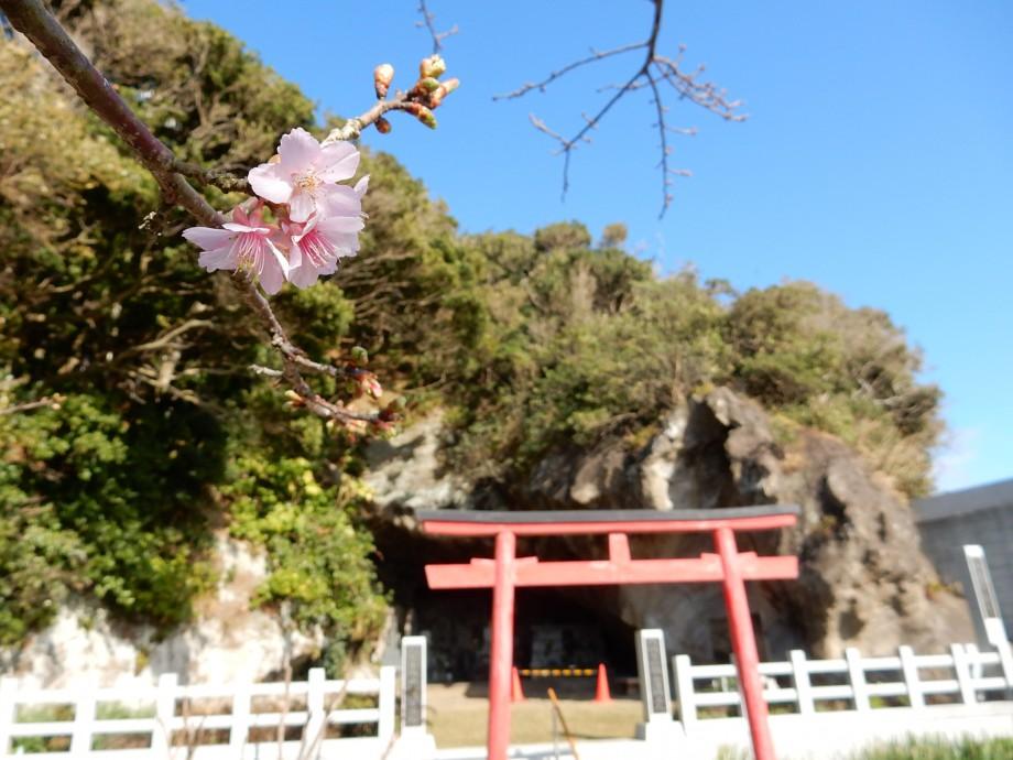荒行の洞窟と早すぎる桜
