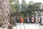 初不動 枝垂れ梅と僧侶|目黒不動