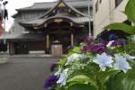 いきいきあじさい祭|長國寺