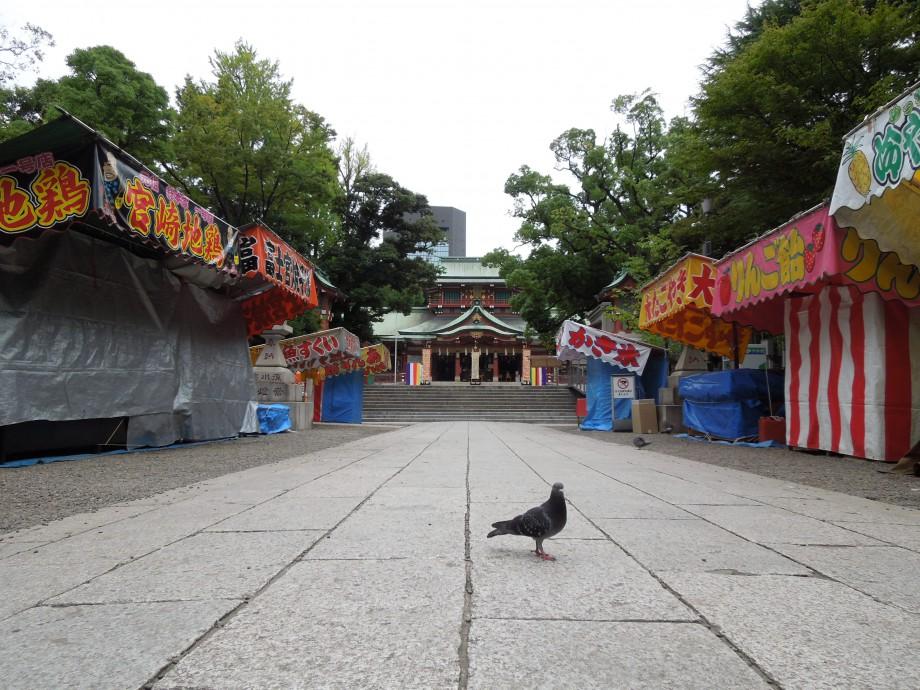 祭りの前、八幡宮の鳩