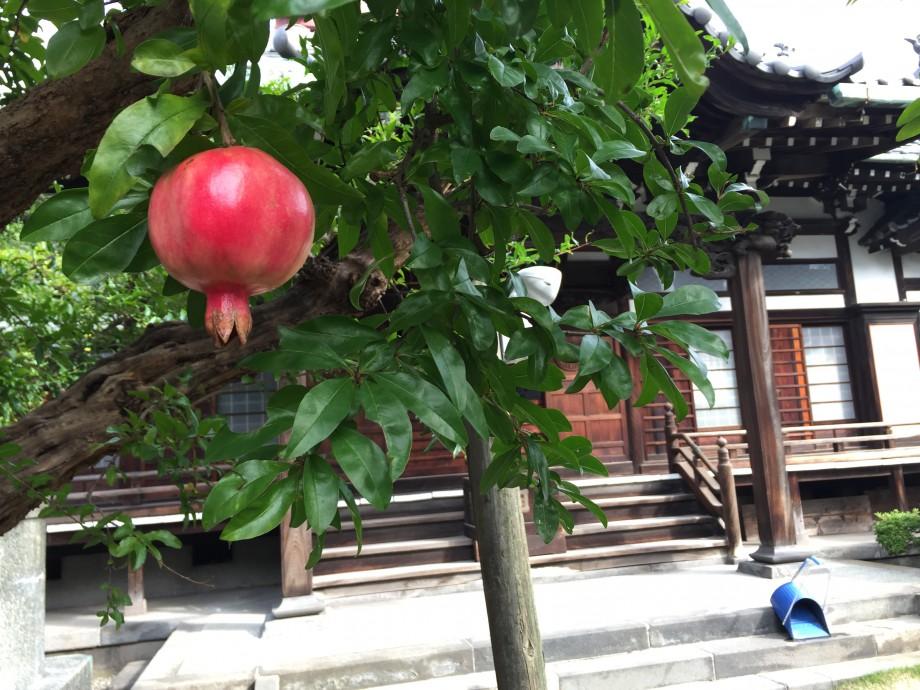 お寺と柘榴の秋