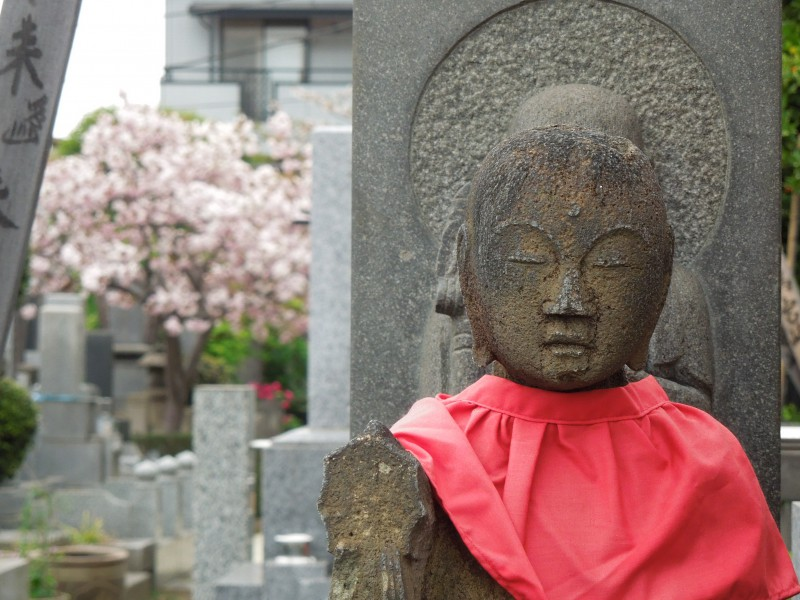 染井のお寺の八重桜