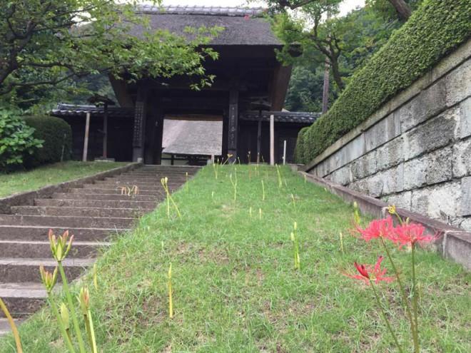 201700821_西方寺山門と彼岸花
