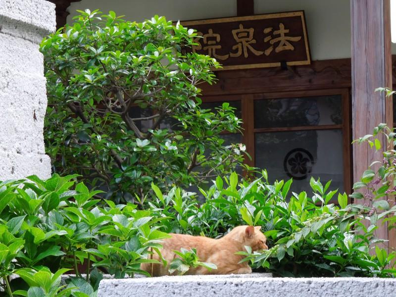 本所の狛猫|法恩寺の塔頭寺院