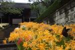 茅葺の寺に満ちる曼殊沙華
