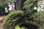 寺フェスの境内|柳嶋妙見山法性寺