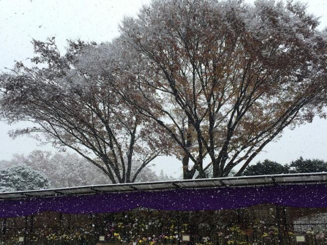 20161124_深大植物公園雪