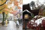 雪のお寺をゆく|深大寺・高幡不動