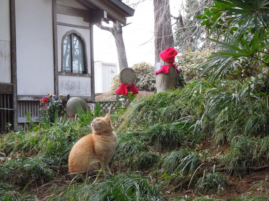 地蔵と猫|水戸六地蔵寺