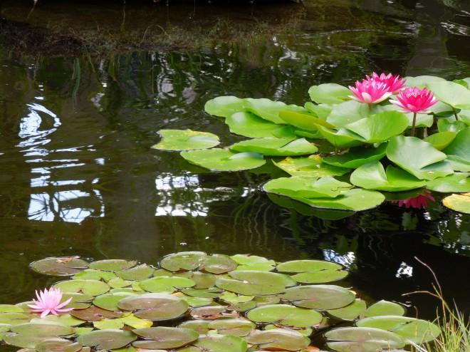 蓮池の落水と風鈴|西新井大師風鈴祭り