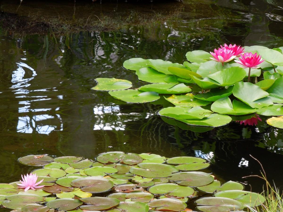 蓮池の落水と風鈴 西新井大師風鈴祭り
