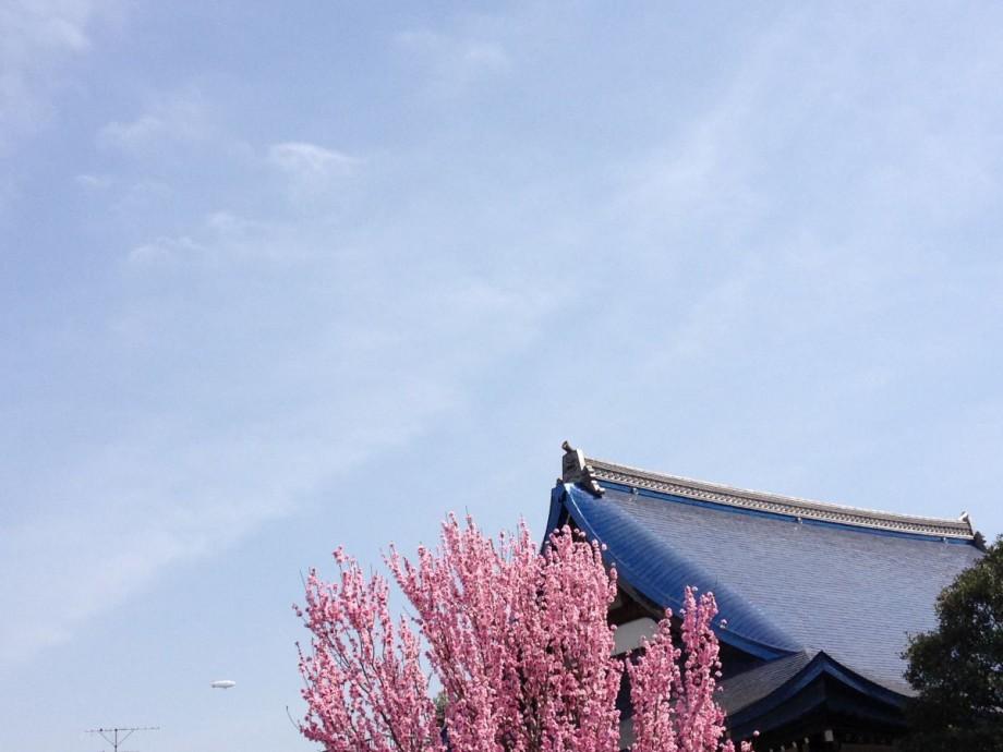8年前の今日のお寺|谷中興禅寺