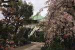 8年前の今日のお寺|花の寺|豊島区南蔵院
