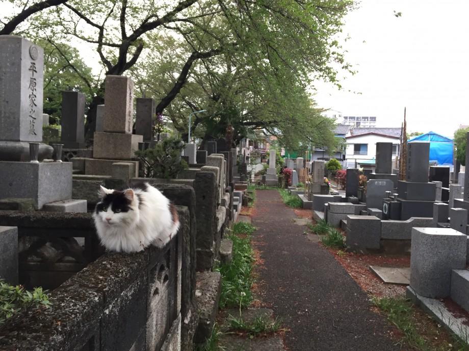 3年前の今日のお寺|染井の里の墓守たち