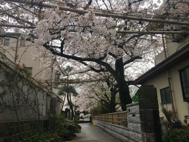 2020年3月30日撮影本誓寺参道