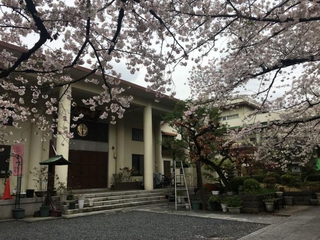 2020年3月30日撮影本誓寺本堂