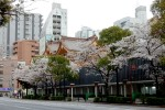 4年前の今日のお寺|日本橋水天宮