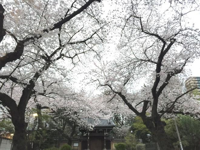 4年前の今日のお寺|雑司ヶ谷法明寺