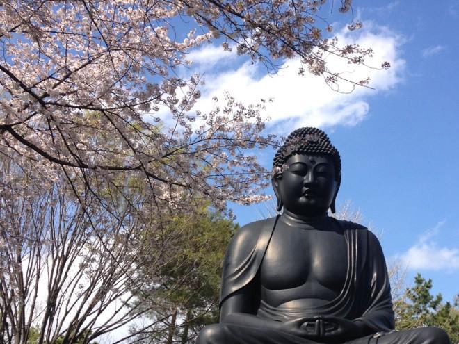 6年前の東京大仏と桜