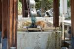 5年前の今日のお寺|彦根の猫住職